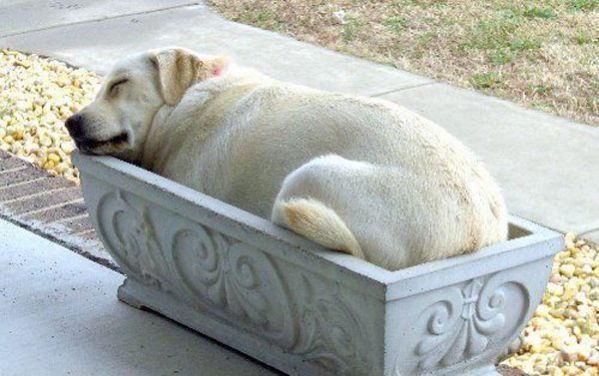 good_dog_bed